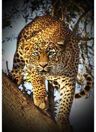 Call of the Wild Digital Print 32 Leopard Panel