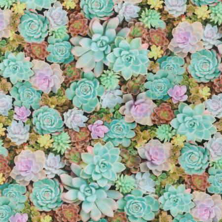 Cactus Imaginings