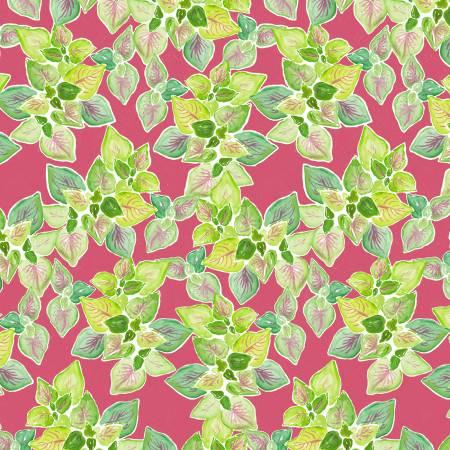 Multi Leafy Graden