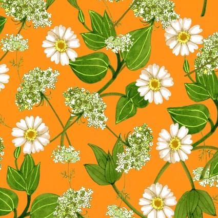 Y2781-35 Zinnias in Bloom