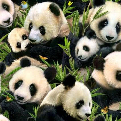 SPECIALTY FABRICS:  Packed Panda Bears on Grass by Elizabeth's Studios