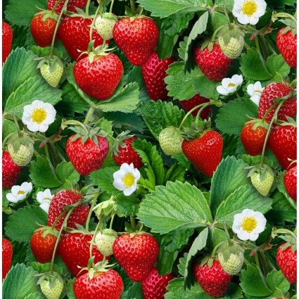Berry Good - 508 green - cherries