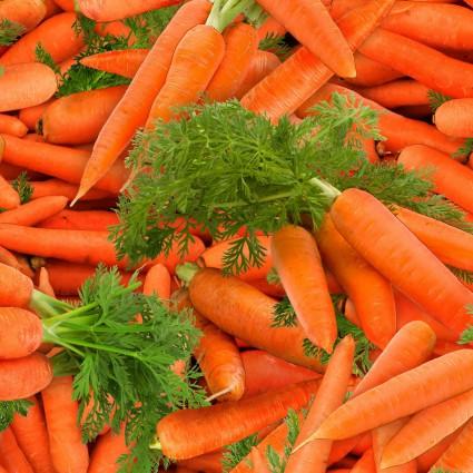 SPECIALTY FABRICS:  Carrots:  Food Festival by Elizabeth's Studios