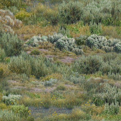 Where Buffaloes Roam ELS9702-GRE