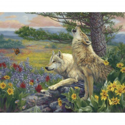 Wolves in the spring - Field