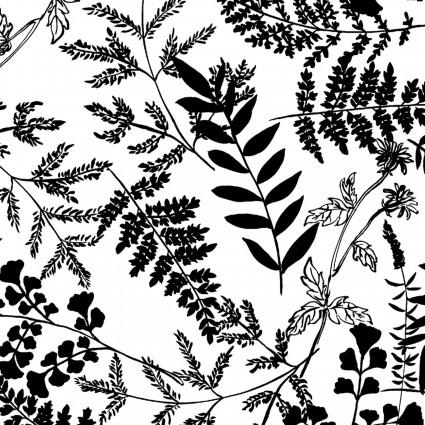 Better Basics Black Ferns on White