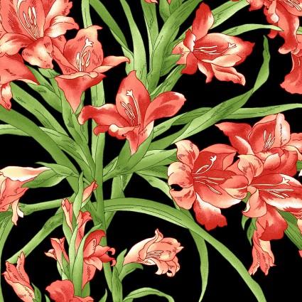 Sommersville Black Gladiolus