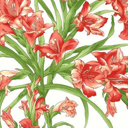 Sommersville White Gladiolus