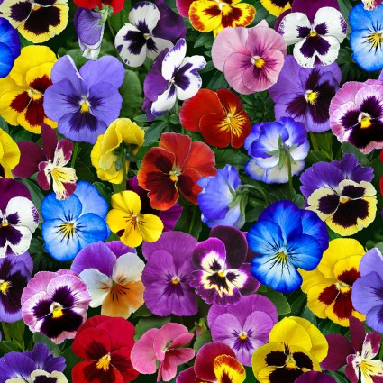 Packed Pansies:  Lovely Pansies by Elizabeth's Studio