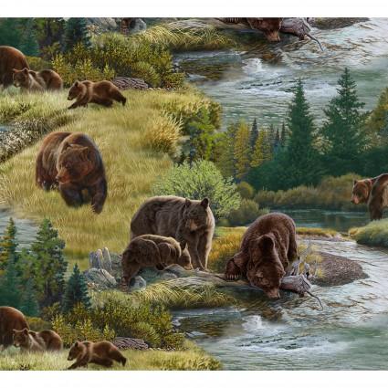 North American Wildlife - Bears