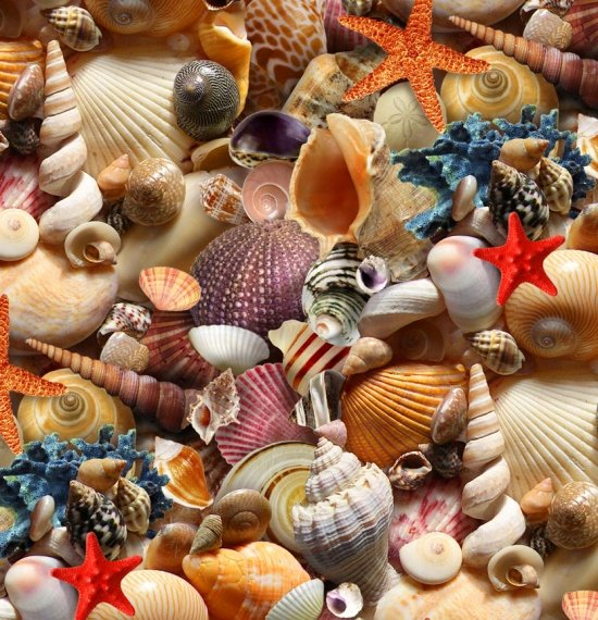 ES-Landscape Medley 392 Multi - Packed Shells