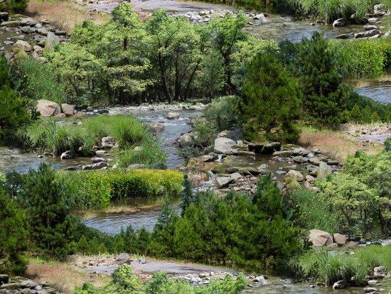 Landscape Medley 425 Green