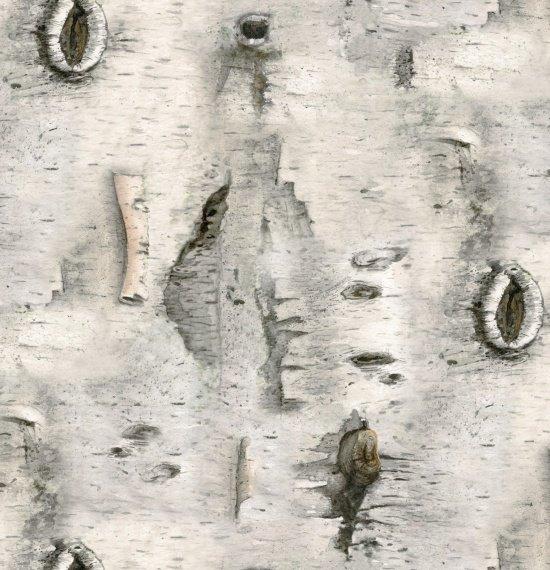 Foust Textiles - Landscape Melody - Birch Bark - 4324 - Gray