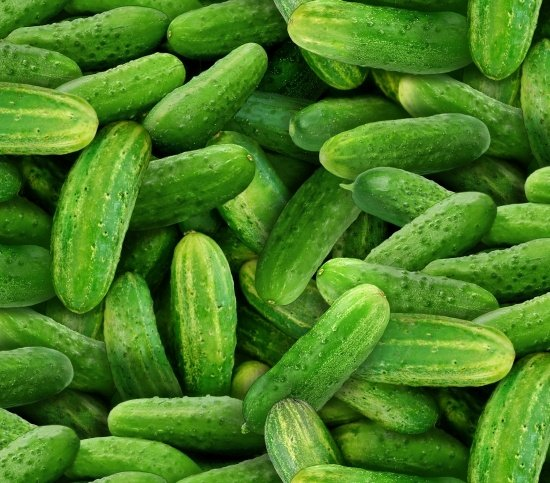 Food Festival Cucumber Pickles Packed Green