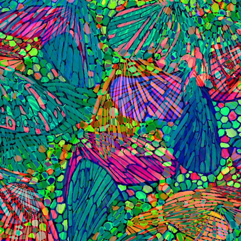 OF-Butterfly Waltz 60-3981 Bright Multi - Butterfly Wings