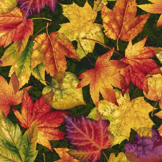 Autumn Album Leaves