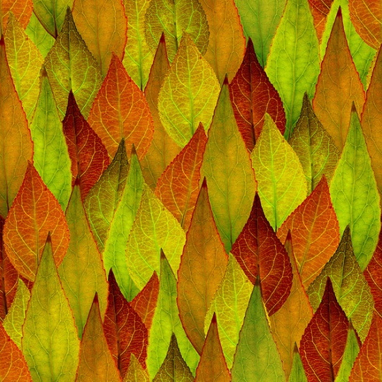 Nature's Narratives - Leaf