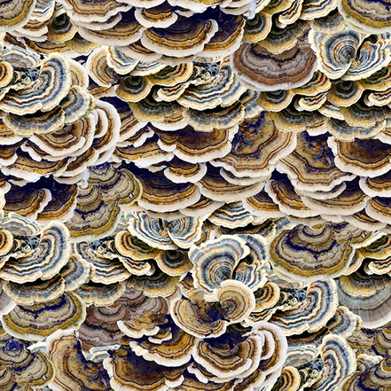 SPECIALTY FABRICS:  Turkey Tail Mushrooms:  Natures Narratives - Forest Floor - Earth by Hoffman