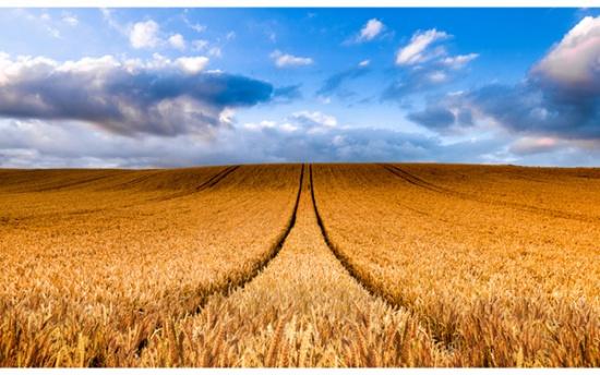 Panel 61 Wheat R4692-84-Wheat Sun Up to Sun Down