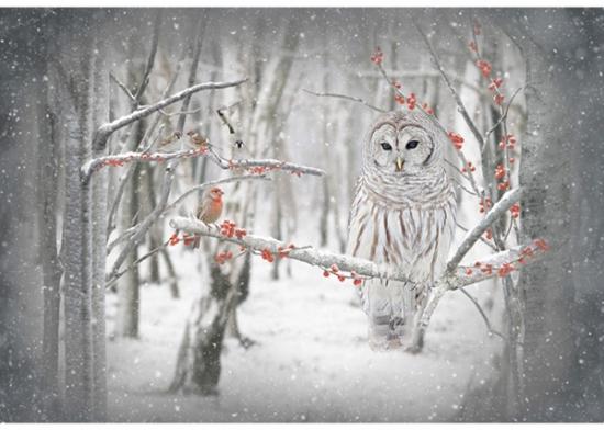 Hoffman Owl S4722 126 Birch Call of the Wild Digital Print Panel