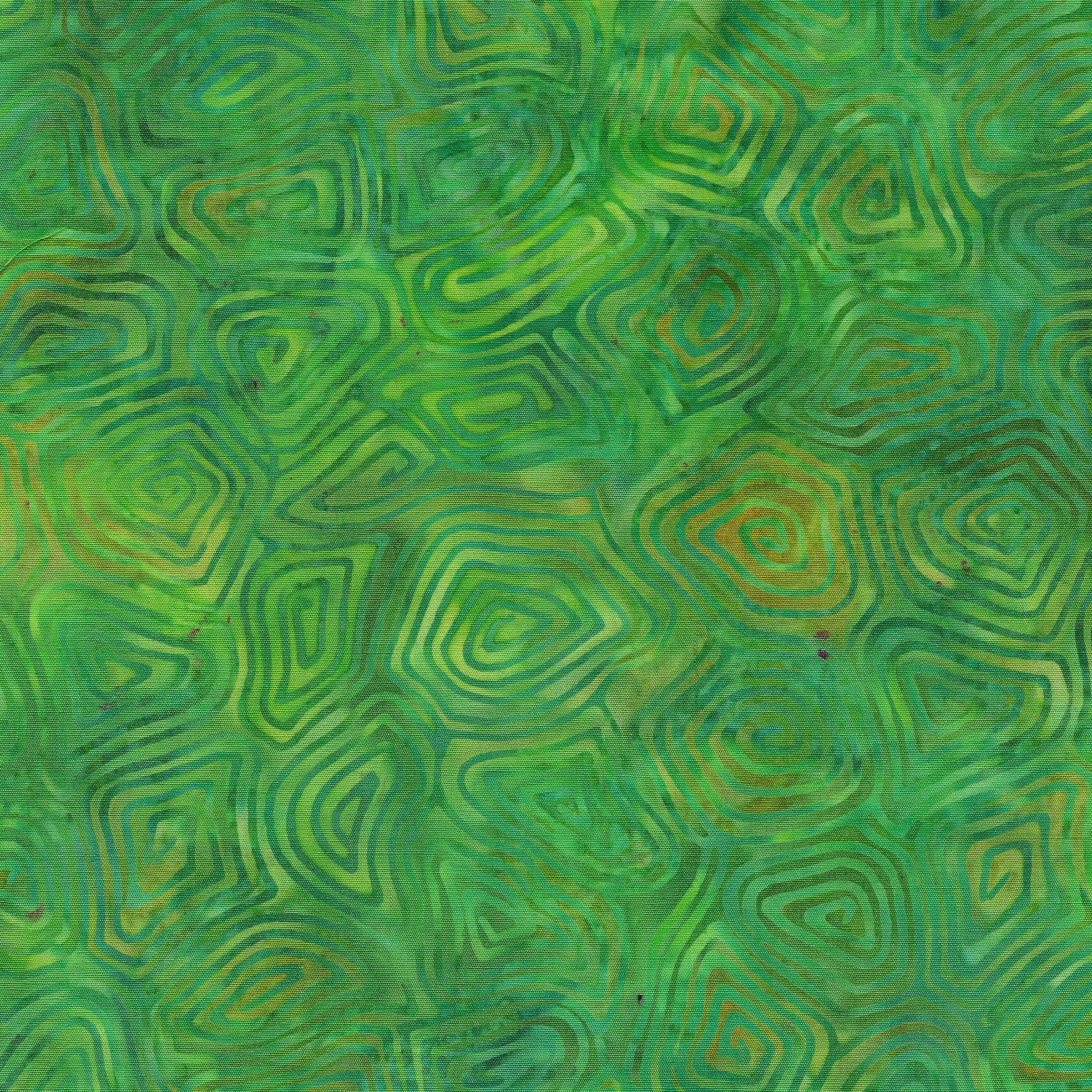111902657 / Turtle Shell-Salamander