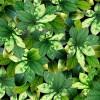 Garden LeavesGreen Leaves