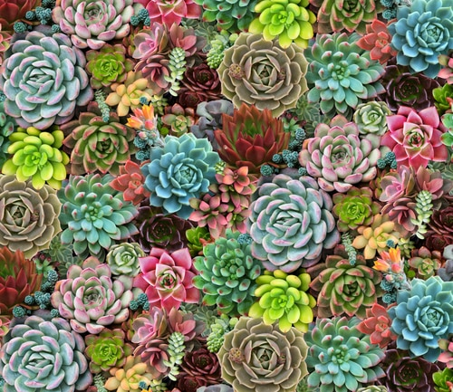 Succulent Charm Packed