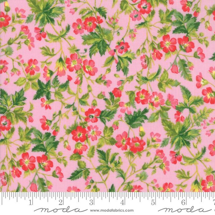 Wildflowers IX Petunia