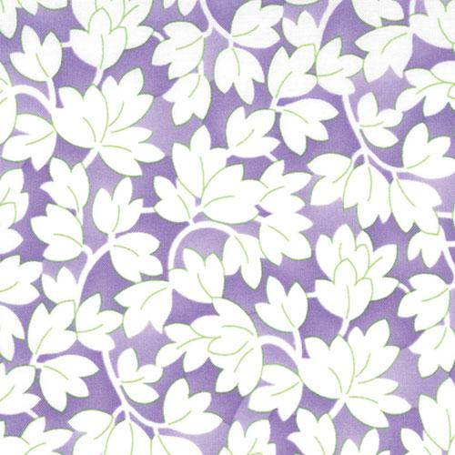 Happy Iris Purple