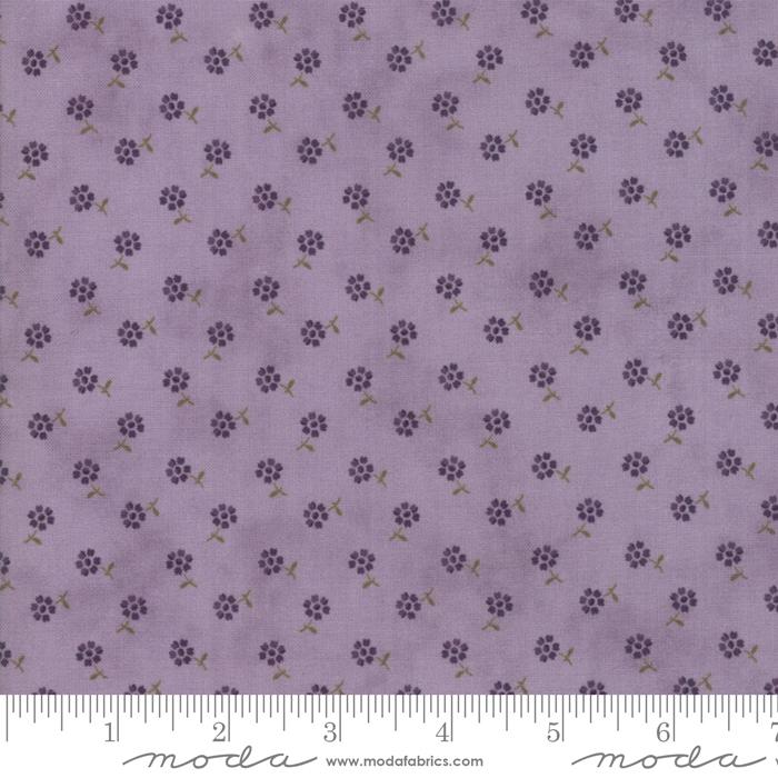Sweet Violet - Lilac flower 2226 14
