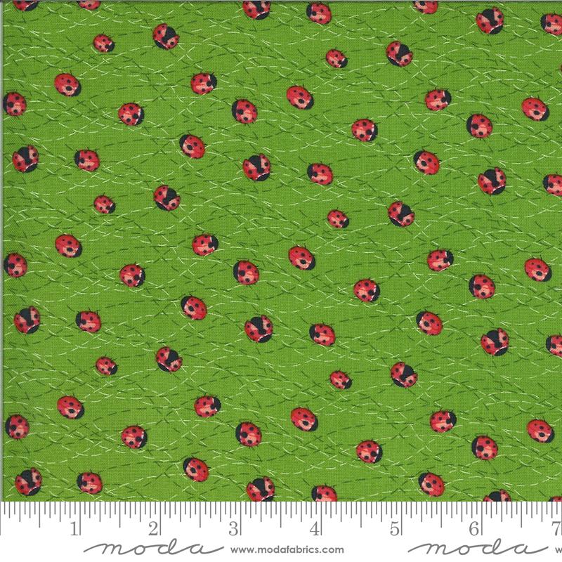 Solana Ladybug Sprout 48684 15