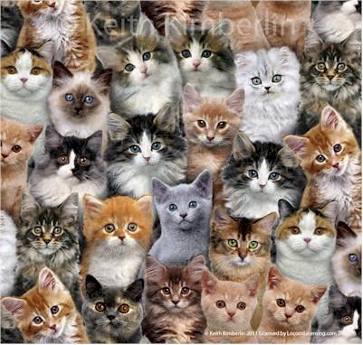 ES3802 - Cats Adorable Pets (21C)