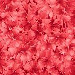 CHLOE Red Geraniums 9181-R
