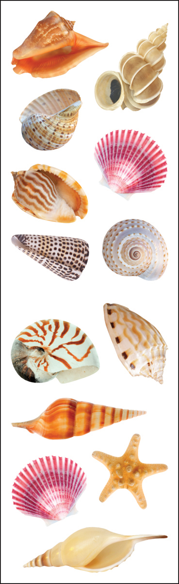 SEA SHELLS-MRS GROSSMAN'S STKRS