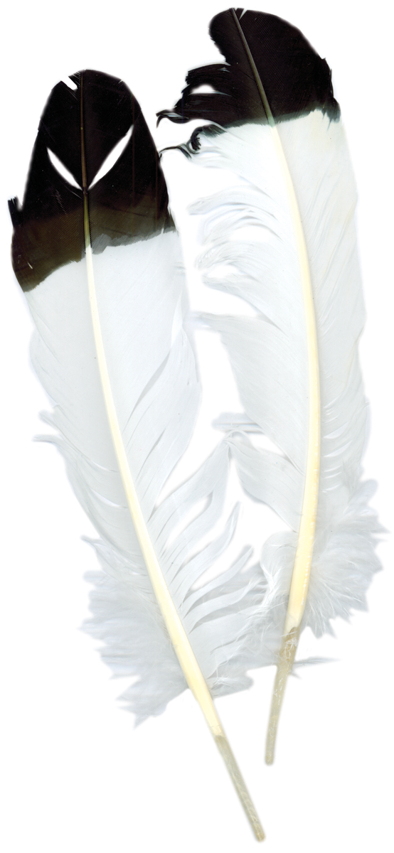 Imitation Eagle Quill Feathers 2/Pkg-White W/Black Tip