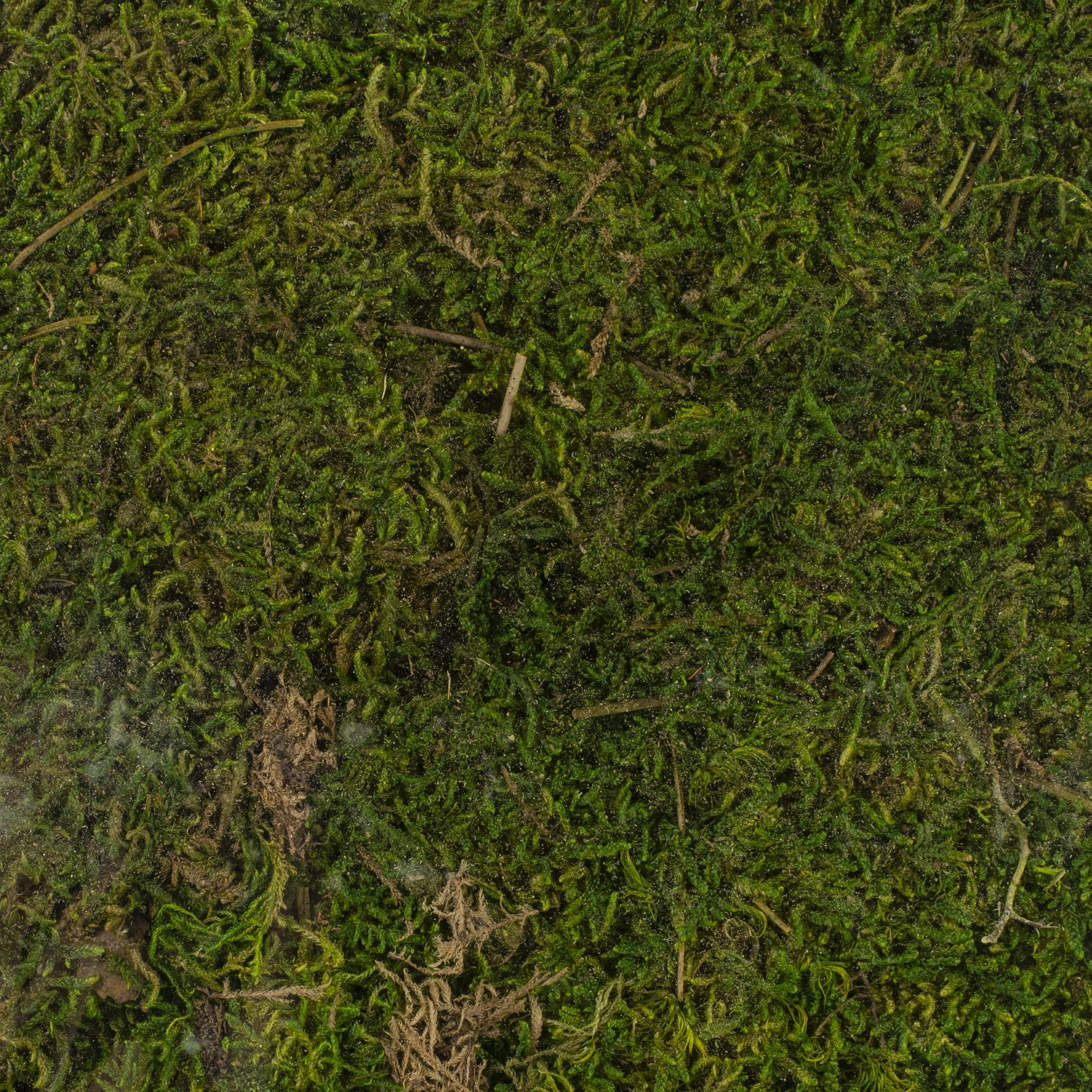 Super Moss Perserved Sheet Moss 8oz-