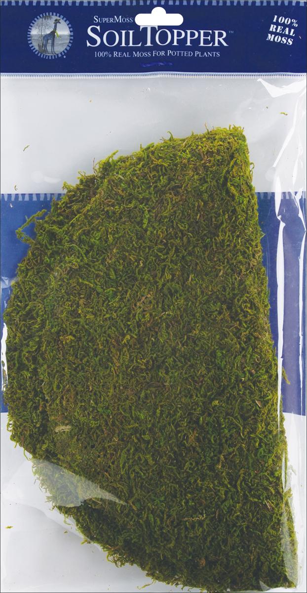 Super Moss Moss Pot Toppers 12 3/Pkg-Green