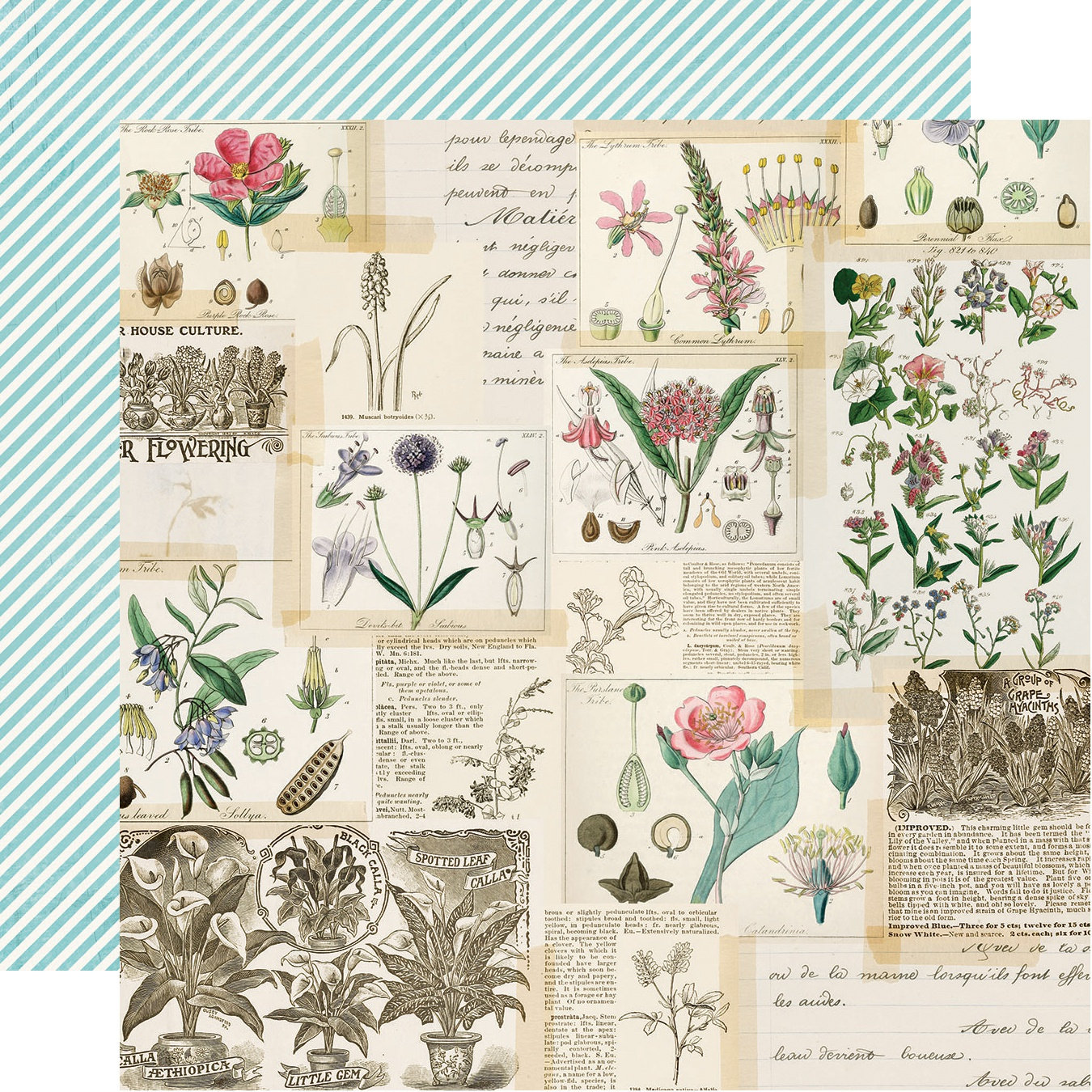Simple Vintage Botanicals Double-Sided Cardstock 12X12-Collect Moments