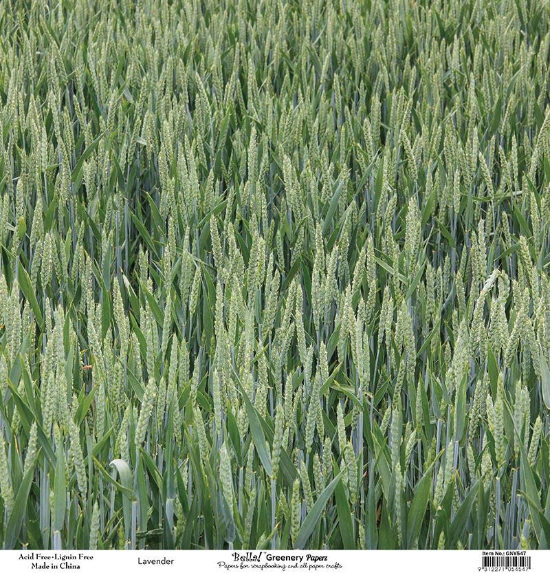 Bella Greenery Lavender