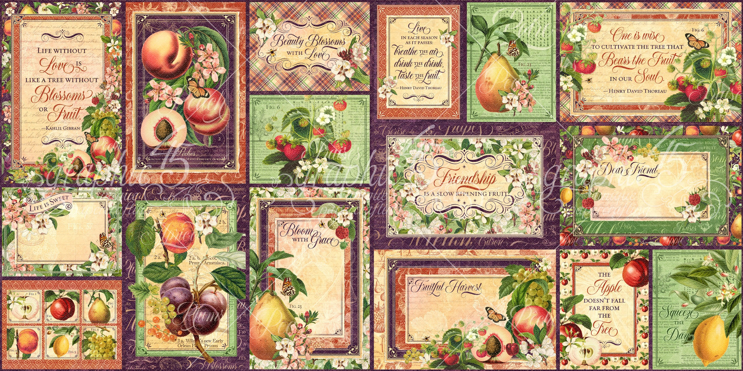 Fruit & Flora Ephemera Cards-(16) 4X6 & (16) 3X4