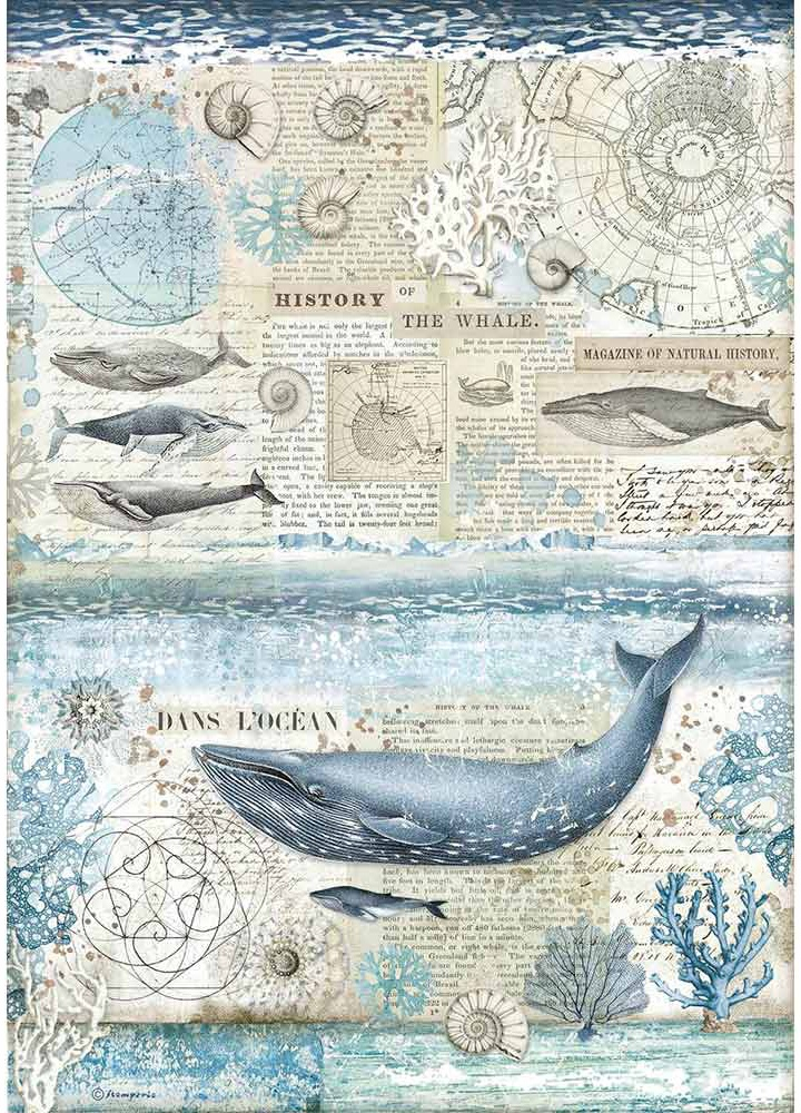 Stamperia Rice Paper Sheet A3-History Of Whale, Arctic Antarctic