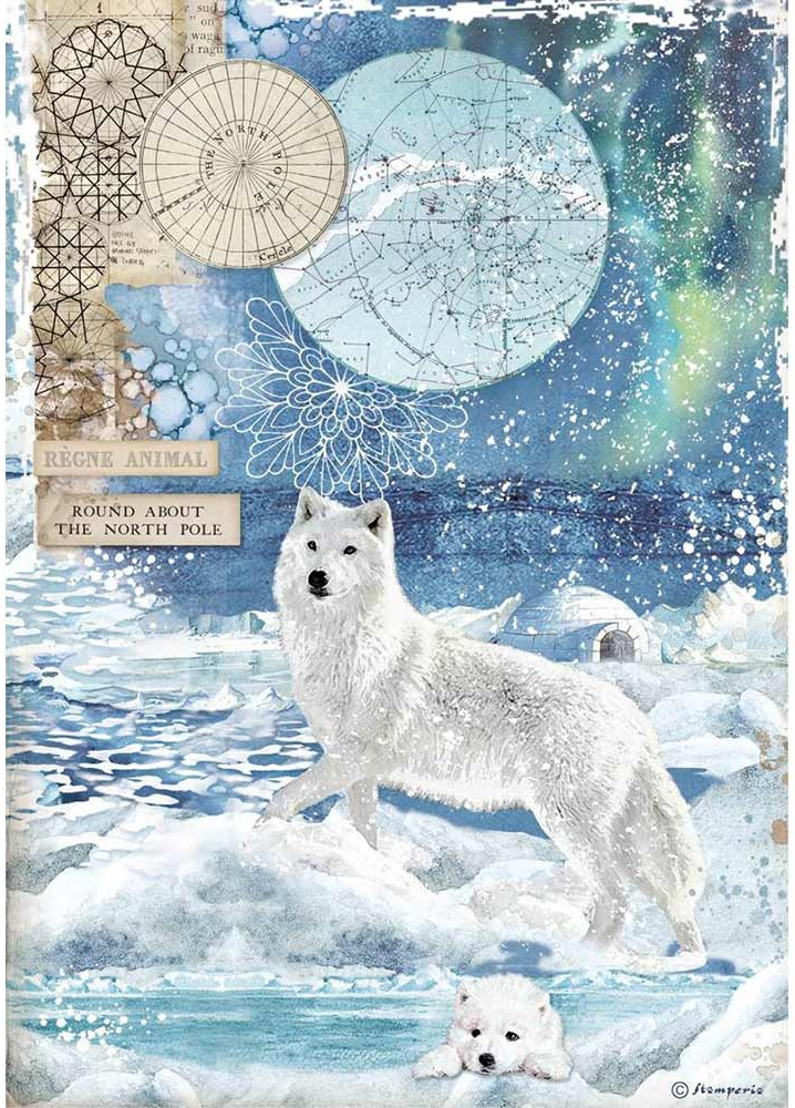 Stamperia Rice Paper Sheet A4-Wolf Arctic Antarctic