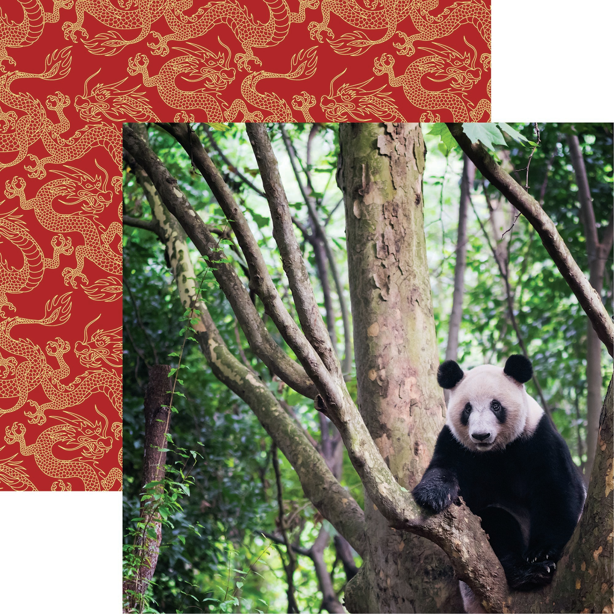 Click her for more images China Double-Sided Cardstock 12X12-Giant Panda