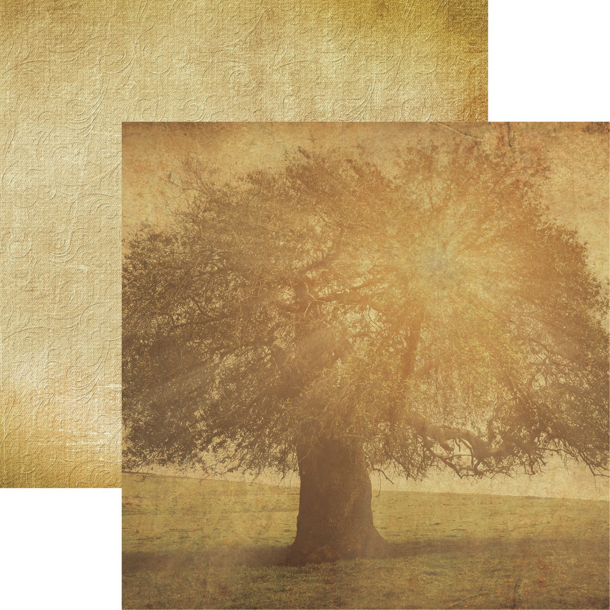 Click her for more images Family Double-Sided Cardstock 12X12-Family Tree