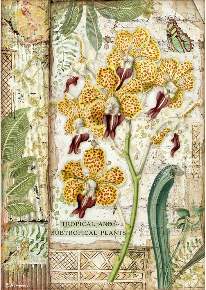 Stamperia Rice Paper Sheet A4-Orchid, Amazonia