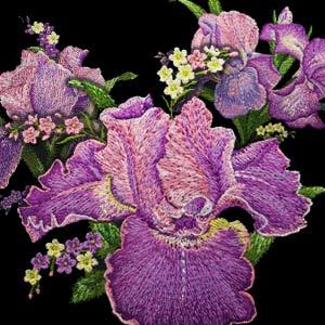 OESD Irresistible Iris Cd