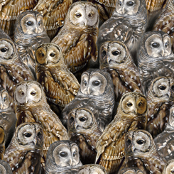 Nocturnal Wonders PACKED BARRED OWLS BLACK