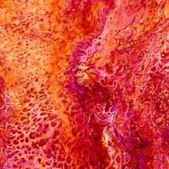 Fusion SPLASH RED
