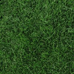 Open Air GRASS DARK GREEN