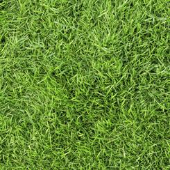 Open Air GRASS SPRING GREEN